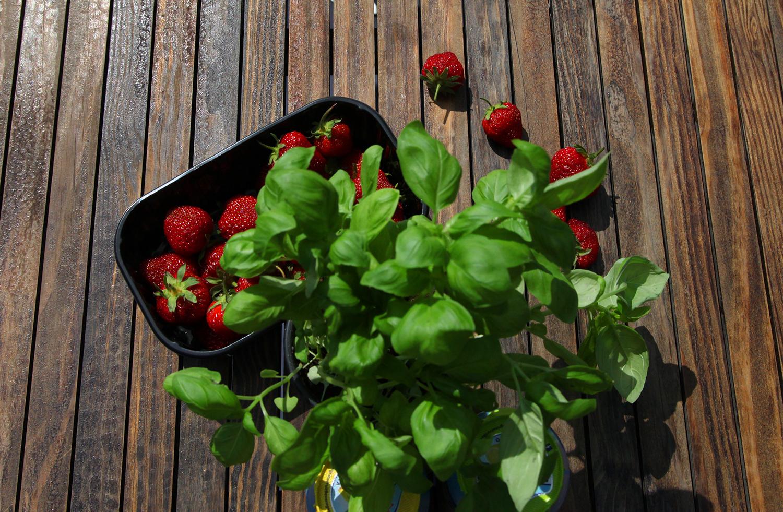 Jordbær på båttur blir aldri feil :)