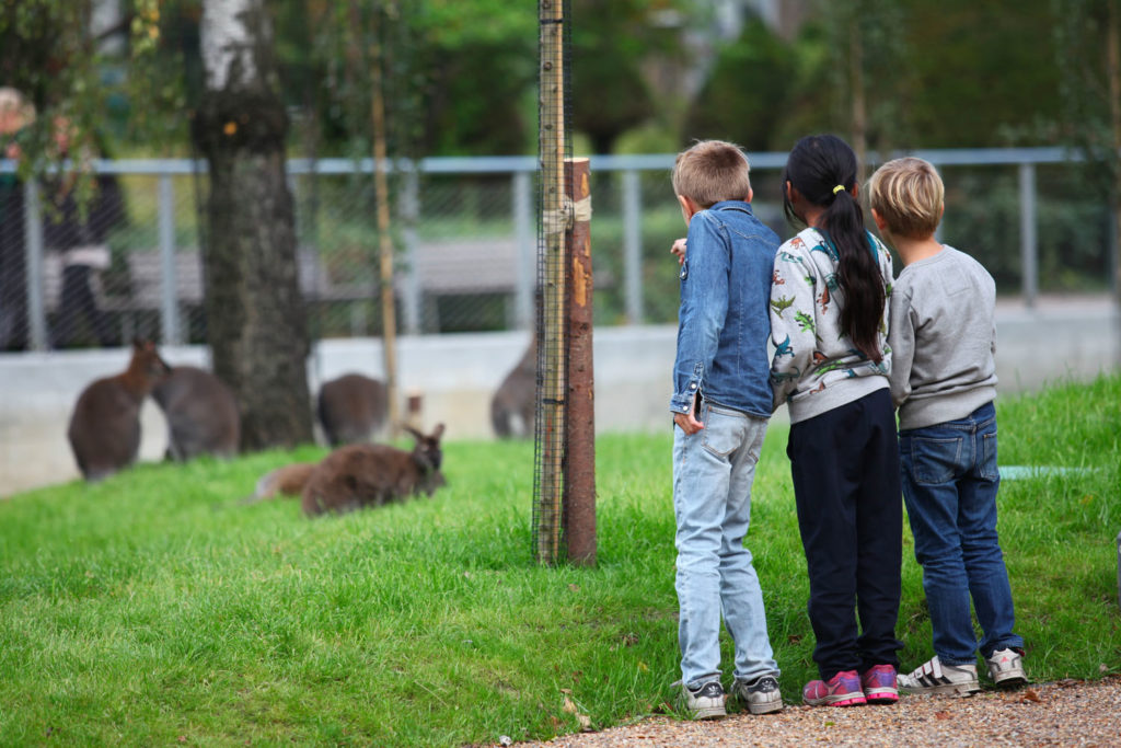 Kom nær dyrene i Børnezoo