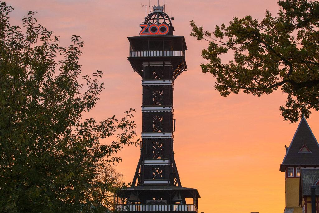 Solnedgang og det flotte tårnet i Zoo.